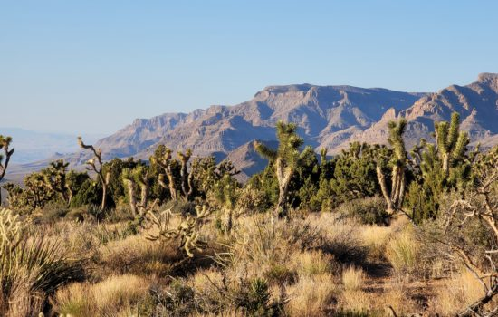 Robin – 1.01 Acres in Mohave County, AZ